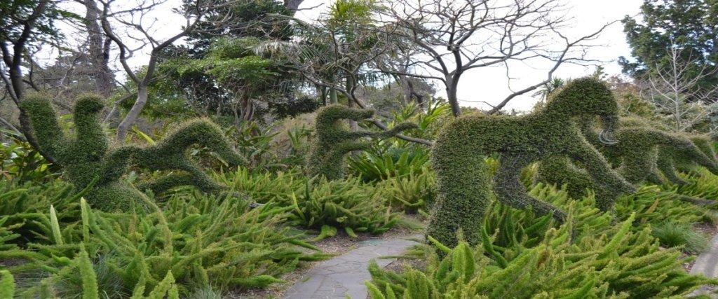 piante a forma di cavalli come esempio di creatività ai Royal Botanic Gardens