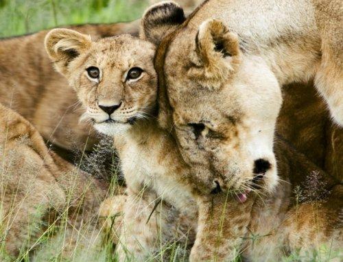 Le cinque riserve naturali più belle dell'Africa