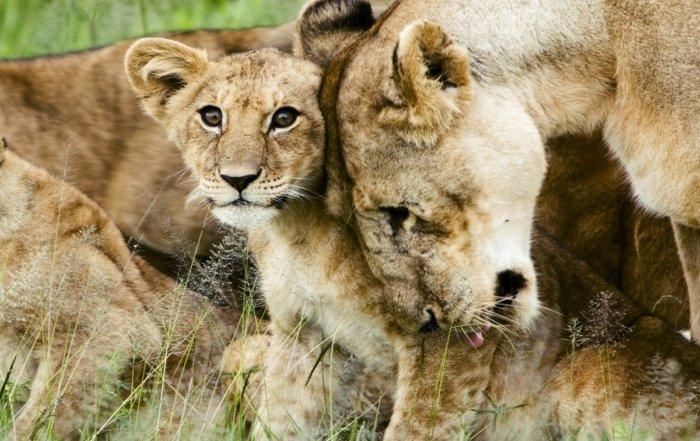 i 5 più bei parchi naturali in Africa