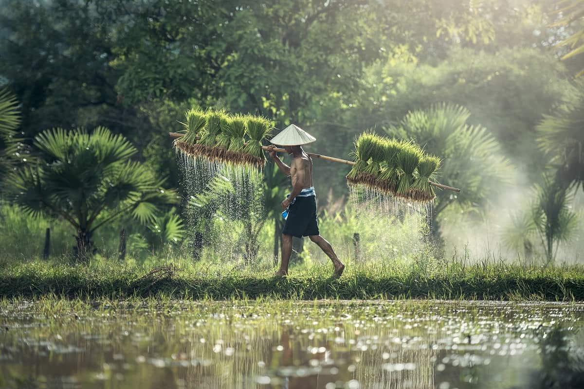 Indonesia: cosa sapere? Consigli e curiosità sulla suggestiva Indonesia