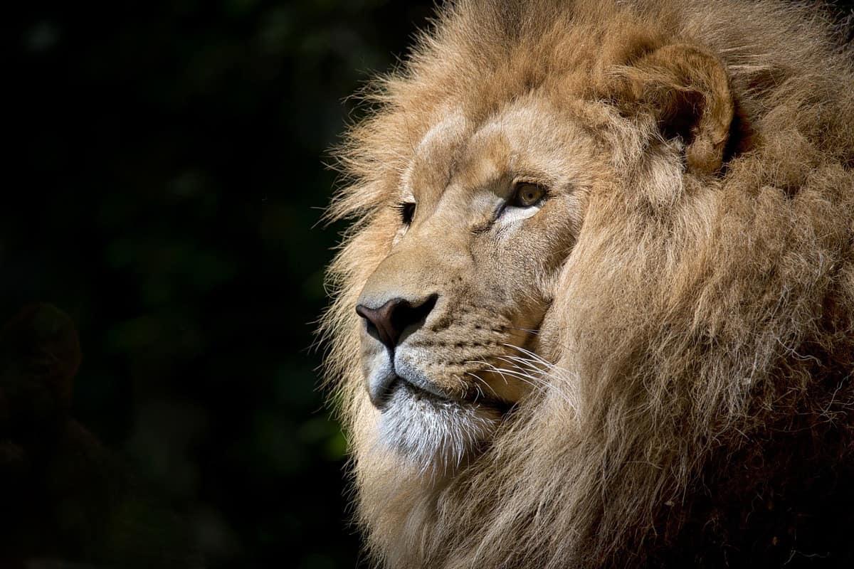 Africa: i big five I cinque animali africani per eccellenza