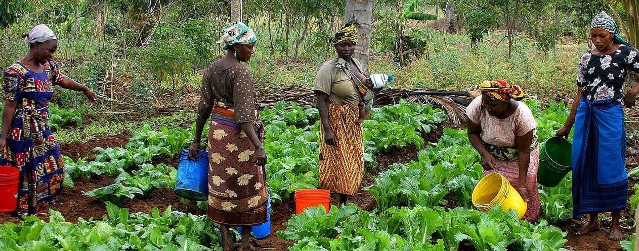 Economia agricoltura Tanzania