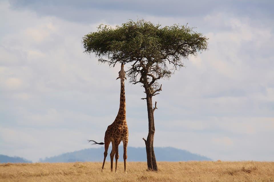Safari: 10 regole per un'esperienza perfetta Ecco alcuni consigli per godersi al meglio l'Africa